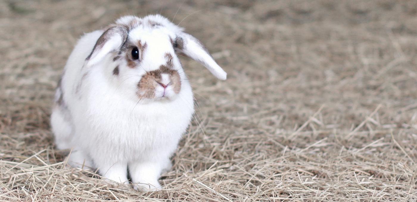 Rabbits & Pocket Pets