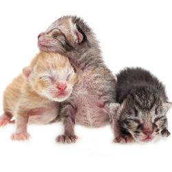 Cat Rescue Groups