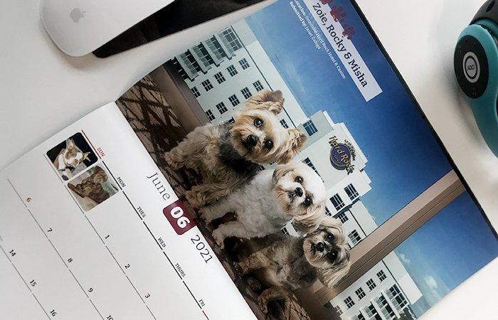 Pet Photo Contest Calendar